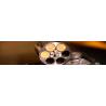 Revolver Catégorie B